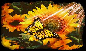 sunflower sun monarch butterfly photograph by debra miller