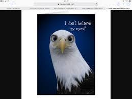 blog u2014 crystal palace austin eagles