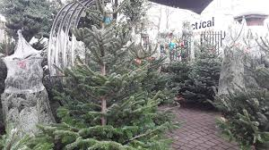 where to buy christmas trees in london u2013 how to get a christmas