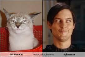 Spiderman Face Meme - evil plan cat totally looks like spiderman randomoverload