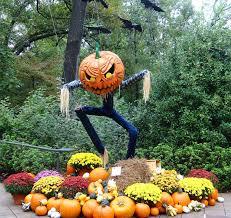 halloween scarecrows in the garden phillip u0027s natural world 1 0 2