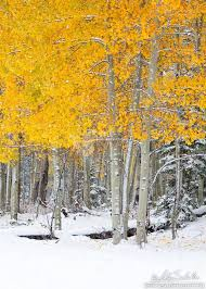 16 best trees images on nature landscapes and yellow tree