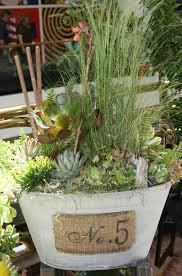 ciao newport beach creative succulents in petite pots