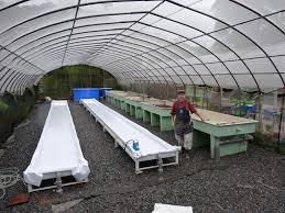 converting existing greenhouses to portable farms aquaponics systems