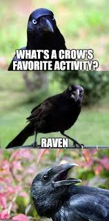 Crow Meme - bird pun crow imgflip