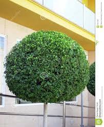 baum fã r balkon 28 images sichtschutz zaun pflanzen die - Baum Fã R Balkon