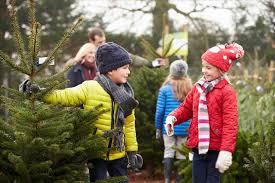 christmas tree farm family photos cheminee website