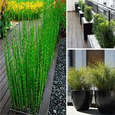 grass plants for privacy grass decorations inspirations