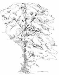 drawing photorealistic trees art lesson