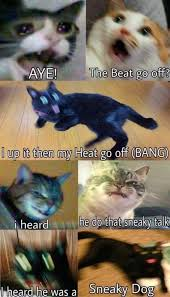 Sneaky Cat Meme - dopl3r com memes aye the beat go off l up it then my heat go