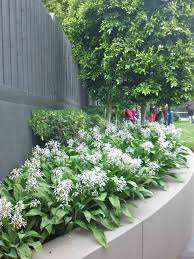 Garden Design Ideas Sydney With A Sydney Look Gardens Design Ideas Australia Outdoor Garden