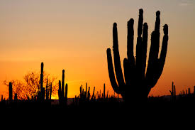 sonoran desert native plants a silhouette of the sonoran desert sunset sunset in the sonoran