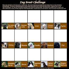 Types Of Memes - dog breed challenge meme by goku san on deviantart