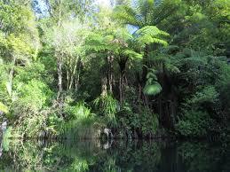 nz native plants list new zealand native plants u2013 ponga movin2newzealand