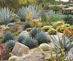 Cactus Garden Ideas How To Start A Cactus Garden