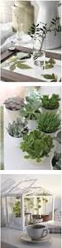 34 best indoor plants images on pinterest plants indoor plants
