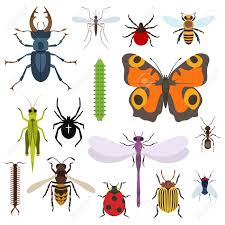 insects and bugs pests and midge set of icons from top view
