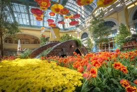 photo beautiful bellagio flowers las vegas usa