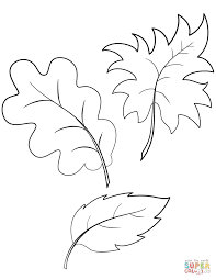 oak and maple leaves coloring page within coloring pages of leaves