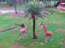 mousesteps disney u0027s animal kingdom lodge kilimanjaro club level