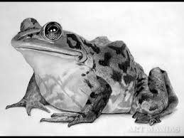 zuesday sketch how to draw a realistic frog yazzi draws youtube