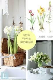 House Plant 81 Best Happy House Plants Images On Pinterest Indoor Plants