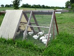 learn everything about chickens coops and cages