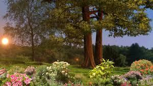 Flowers For Morning Sun - morning light flowers sun rays landscape nature trees raise garden