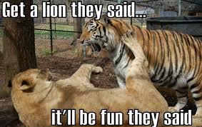 Lion Meme - lion meme