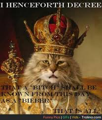 New Cat Meme - king cat decrees a new meme sits on the throne trolino