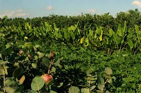 ornamental shrubs and tree services almond tree wholesale nursery