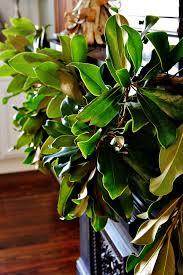 diy magnolia leaf garland thistlewood farm
