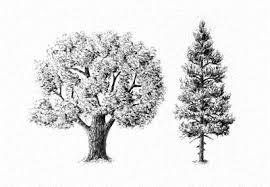 drawing nature envato tuts design illustration tutorials