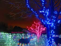 Lights At The Zoo by Seattle U0027s Best Holiday U0026 Christmas Light Spots