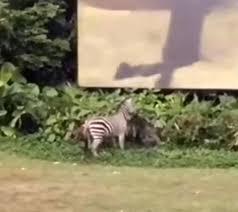 top 91 zebra hd animal spot