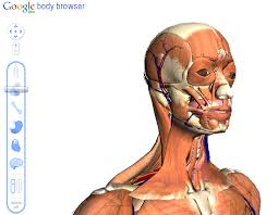 Google Body Anatomy Google 3d Body Browser Now On A Tablet Via Android 3 0