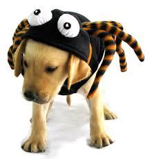 Spider Halloween Costume Dogs Halloween Costumes