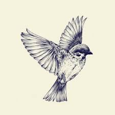 Barn Swallow Tattoo Designs 45 Best Drawings Paintings Nd Sketches Images On Pinterest