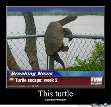 Funny Turtle Memes - escaping turtle by justaguy123 meme center