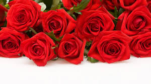 hd images of flowers new red flowers wallpaper u2022 dodskypict