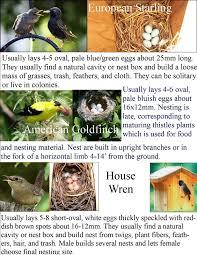 wild birds unlimited common backyard bird nest identification