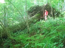 Georgia forestwatch preserve protect restore
