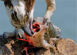 California wild animals images How does vegetarianism impact wild animal suffering essays on jpg