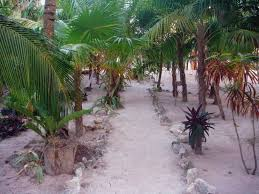 azucar hotel tulum mexico booking com