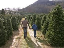choose n u0027 cut christmas trees holiday traditions nc smoky