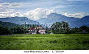mountain backdrop rice fields tiger mountain backdrop stock photo 517869874