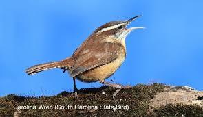 South Carolina birds images South carolina wild birds wild bird feeding watching sc jpg