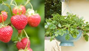 Cool Small Palnts To Grow The 10 Best Fruits To Grow In A Small Garden Dk Explore