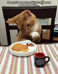 Funny Breakfast Memes - 15 key parts of your workday as told by cats funny images