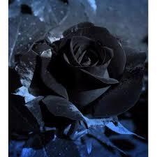 Black Rose Flower Grass Seeds Flower Seeds U0026 Garden Seeds Online Newchic